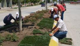 Gelibolu Belediyesi ana arterlere hazır çim seriyor…