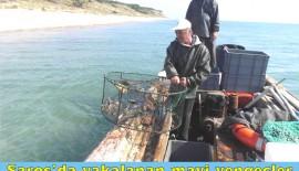 Saros'da yakalanan mavi yengeçler İtalya'ya ihraç ediliyor (VİDEOLU HABER)