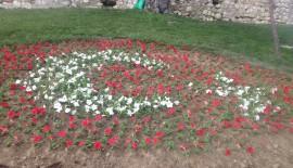 Çiçekler, Bu Kez de Türk Bayrağı Açtı…