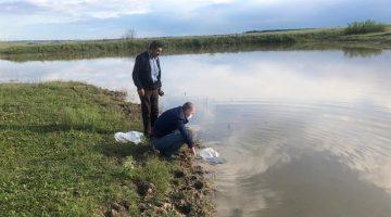 Tekirdağ'da su kaynaklarına 95 bin sazan yavrusu bırakıldı