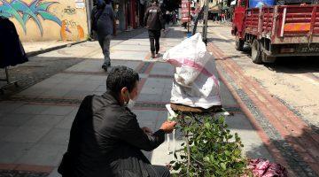 Edirne'de kovandan kaçan çok sayıda arı vatandaşları endişelendirdi