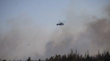 Meriç'te orman yangını
