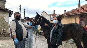 Edirne'de at ve eşekler yönetmelik gereği kimliklendirildi