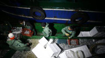 Yasaklı alan dışında kalan İğneada'da hamsi bereketi balıkçının yüzünü güldürdü