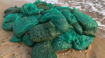 Enez'de kaçak toplanan 1 ton kum midyesi ele geçirildi