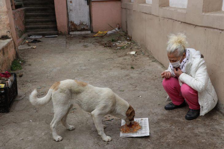 Edirne'de 8 köpek yavrusu ölüsü bulundu