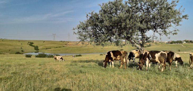 GÖKSAL ÇİDEM'DEN NECATİYE KÖYÜ MERASINDAN TOPRAK ALINMASINA SERT TEPKİ