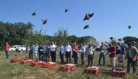 Kılıçköy'de yeniden keklik sesleri yükselmeye başladı