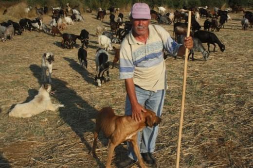 Türkiye Bu cezayı konuşuyor ! Çobana köpek cezası…