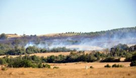 Anız ateşinde ağaçlar yandı